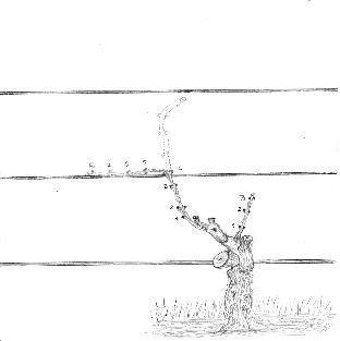 dessin-taille2.jpg